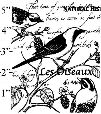Birds Collage Background